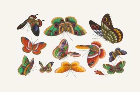 Come essere forti durante la nostra trasformazione da bruchi a farfalle