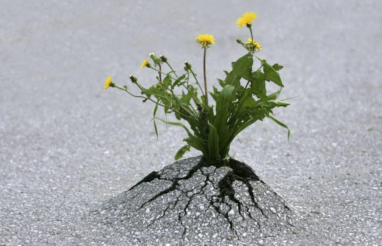 Essere resilienti