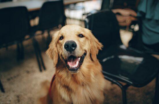pet therapy corso formazione